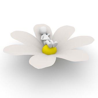 flower-1013722__340